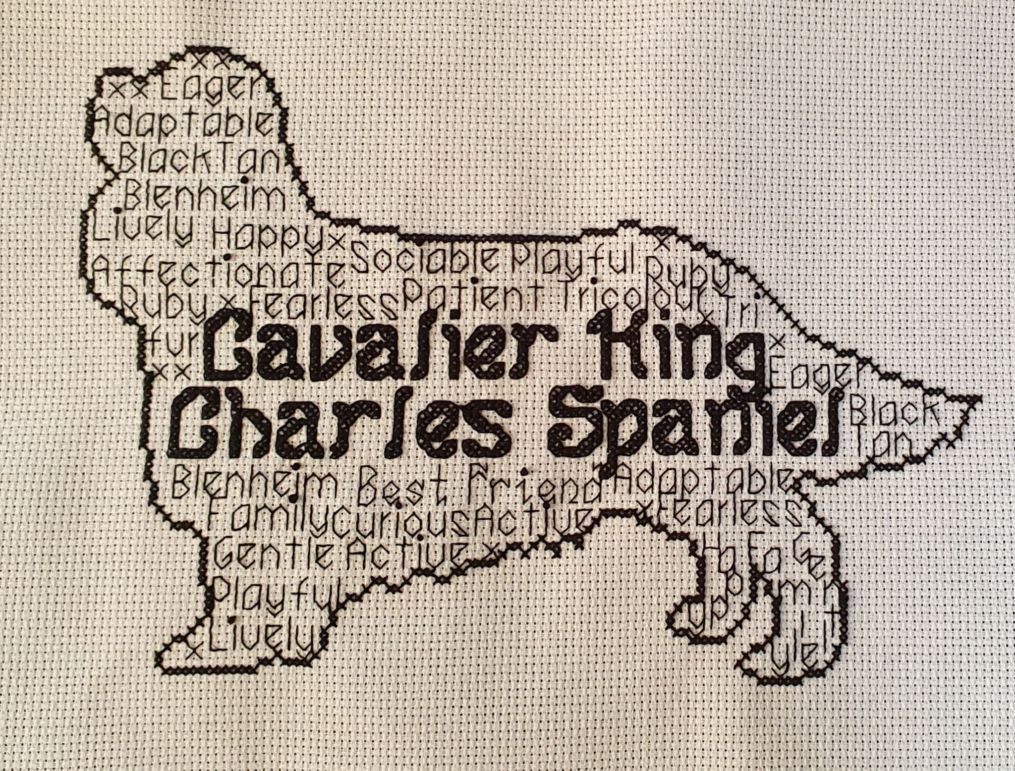 Cavalier King Charles Spaniel In Words